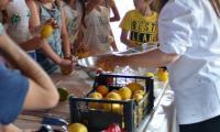 Preparazione_granita_e_limone.jpeg